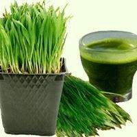WheatgrassMD