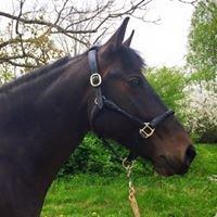Reinas zirgi