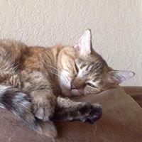 Pet Oasis- Rancho Mirage