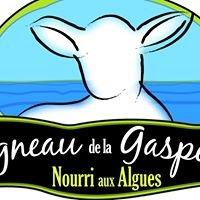 Agneau aux algues de la Gaspésie