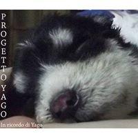 Progetto YAGO - in Ricordo di Yago -