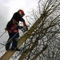 Derbyshire Tree Work