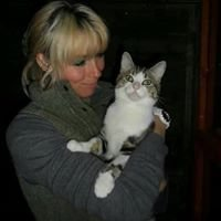 Twelvetrees Luxury Cattery, Chesterfield, Derbyshire