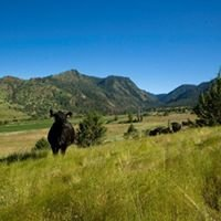 Rudio Creek Ranch Grassfed Beef