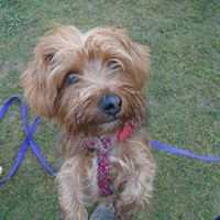 Alice's Home Boarding for Dogs, Bampton, Oxon
