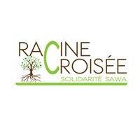 Racine Croisée