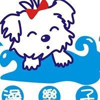 澡樂子愛犬美容工作室《毛樂  健康手作零食》