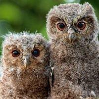 Little Owls Dayhome