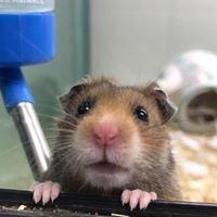 Didcot Pet Store