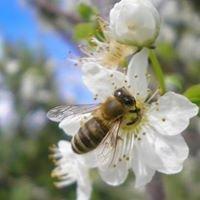 R 'n' Bee Apiaries