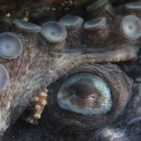 Beagle Secretos del mar