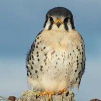 Agrupación ecológica y ornitológica Ultima Esperanza