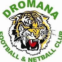 Dromana Tigers
