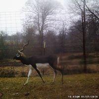 UP Ranch - Wildcreek Exotic Deer Adventures