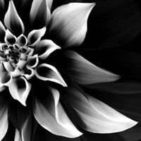 Flowerz By Us