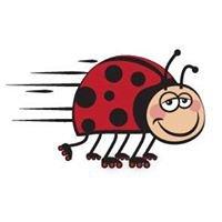 Kimberley Coffee Bug