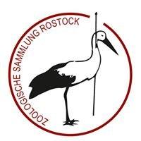Zoologische Sammlung Rostock
