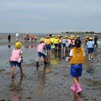 アジアの浅瀬と干潟を守る会