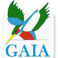 Gaia Rafting