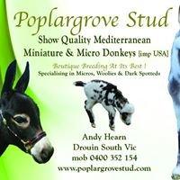 Poplar Grove Stud Micro & Miniature Donkeys