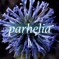 Parhelia