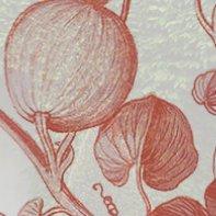 Botanic Horticulture