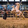 Flanders Horse Expo thumb