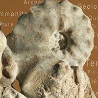 Paléodécouvertes: Fossiles d'Ardèche et d'ailleurs
