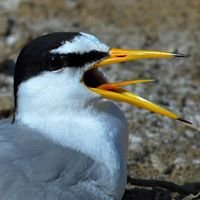 EtnoNature Birdwatching