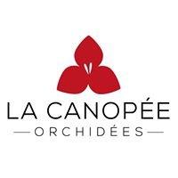La Canopée Orchidées