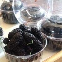 Tom's organic  Mullberries