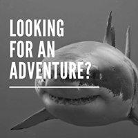 Horizon Charters America's Shark Boat