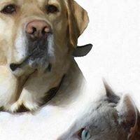 Spolek Pro Opuštěná Zvířata BRNO