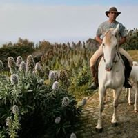 Paulo Ornelas - Passeios pela ilha a cavalo