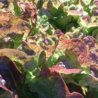 Pam's Biodynamic & Organic Produce