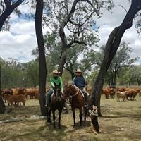 Carrdoon Droughtmasters & Working Dogs