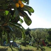 Quinta da Cerejeira - campismo & apartamentos