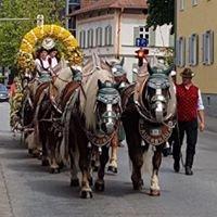Die Chiemgau-Kutscher