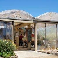 Hothouse Café