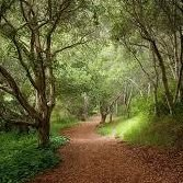 Pathways to Self Healing
