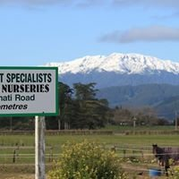 Talisman Nurseries (NZ native plants)