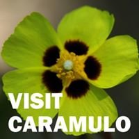 Visit Caramulo