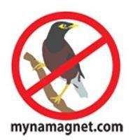 Myna Magnet