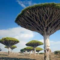 Socotra Dream Tours.