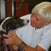 Physiotherapie & Akupunktur für Hunde
