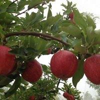 Bunbury Organics