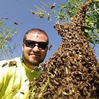 Midwest Bee Removal