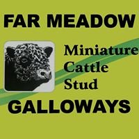 Far Meadow Miniature Galloway Stud