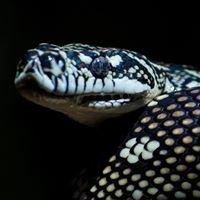 Reptile Rehabilitation Qld Inc