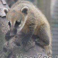 MeerZoo Dierenpark-kinderboerderij-Zorgboerderij